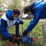 21 мая активисты ТОС «Черняевский» и представители Всероссийского добровольческого движения «Волонтёры Победы» в Индустриальном районе приняли участие в акциях «Сад Памяти» и «Палисадник Победы»